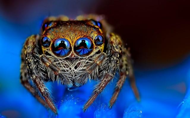 Photo macro d'araignée - Comment choisir un objectif