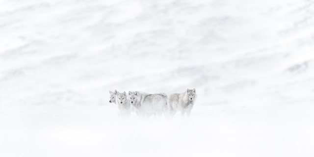 Vincent Munier - Apprendre la photo