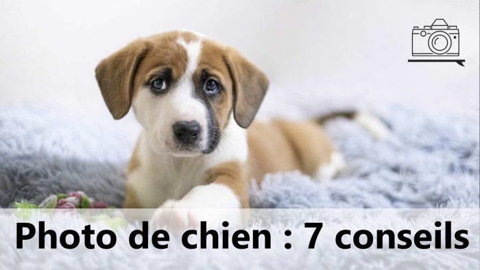 7 conseils pour la photo de chien